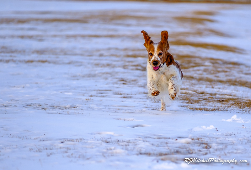 2018-01-Loves to run.jpg